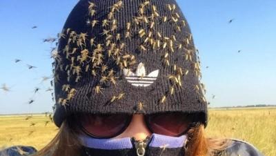 გაინტერესებს რატომ გკბენენ კოღოები მაინცადამაინც შენ?